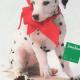 Neiman Marcus Dog