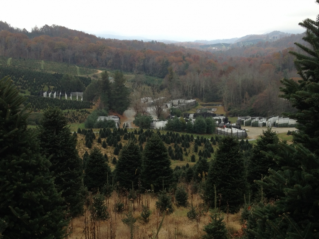 Cartner Christmas Tree Farm